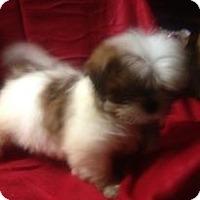Adopt A Pet :: Barney - Hazard, KY