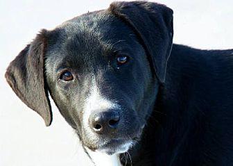Labrador Retriever Mix Dog for adoption in Clifton, Texas - Abby