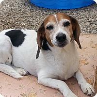 Adopt A Pet :: Buster - Acton, CA