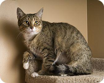 Domestic Shorthair Cat for adoption in Reading, Pennsylvania - Princess