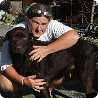 Adopt A Pet :: Diggy - Columbus, IN