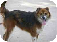 Border Collie Mix Dog for adoption in Murfreesboro, Tennessee - Bandit