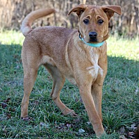 Shepherd (Unknown Type) Mix Dog for adoption in Waldorf, Maryland - Pablo