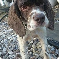Adopt A Pet :: Hunter - Sugarland, TX