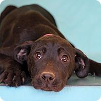 Adopt A Pet :: Alma - Waldorf, MD