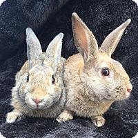 Adopt A Pet :: Lycus & Ladon - Watauga, TX