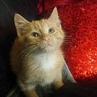 Adopt A Pet :: kisu - Sacramento, CA
