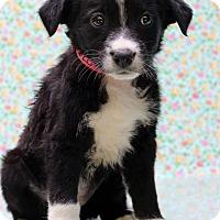 Adopt A Pet :: Rydel - Waldorf, MD