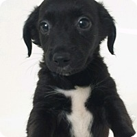 Adopt A Pet :: FANNY-ADOPTED - Cranston, RI
