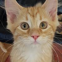 Adopt A Pet :: Zarla - Grayslake, IL