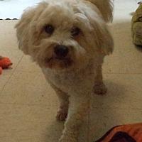 Adopt A Pet :: Tanner - Nixa, MO