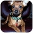 Photo 1 - Miniature Pinscher Mix Puppy for adoption in Inman, South Carolina - Coby