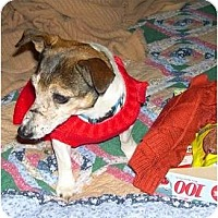 Adopt A Pet :: Penny - Suffolk, VA