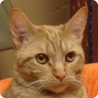 Adopt A Pet :: Sheeran - Winchester, CA