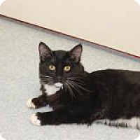 Adopt A Pet :: Blackie - El Cajon, CA