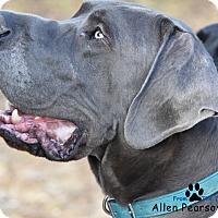 Adopt A Pet :: Nike - Manassas, VA