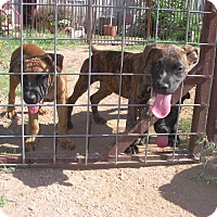 Adopt A Pet :: Ernie, Mike and Robert - Buchanan Dam, TX