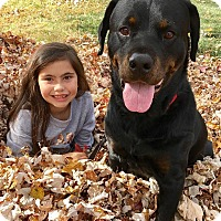 Adopt A Pet :: Dylan - Frederick, PA
