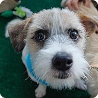 Adopt A Pet :: Mac - La Mirada, CA