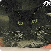 Adopt A Pet :: Lolita - West Kennebunk, ME