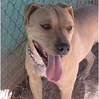 Adopt A Pet :: Spike - Las Cruces, NM