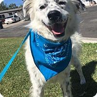 Adopt A Pet :: Tequila - Newport Beach, CA