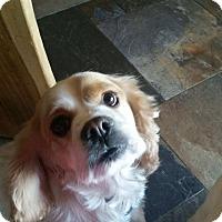 Adopt A Pet :: Sparkle - Santa Barbara, CA