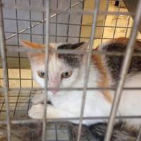 Adopt A Pet :: China - Savannah, TN