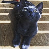 Adopt A Pet :: Jimmy - Los Angeles, CA