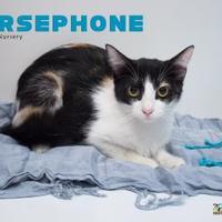 Adopt A Pet :: paws cat rm 7-6-2017 - San Angelo, TX