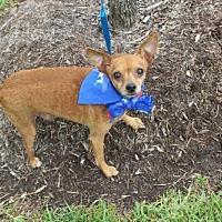 Adopt A Pet :: Kermit - Missouri City, TX