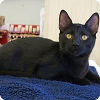 Adopt A Pet :: Onyx N - Sacramento, CA