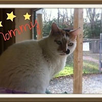 Adopt A Pet :: Mommy - Ocean View, NJ
