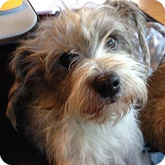 Terrier (Unknown Type, Small) Mix Dog for adoption in Quentin, Pennsylvania - Molly - (Pending Adoption)
