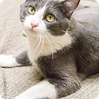 Adopt A Pet :: Louie - Chicago, IL