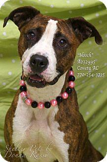 Boxer Mix Dog for adoption in Newnan City, Georgia - Hooch