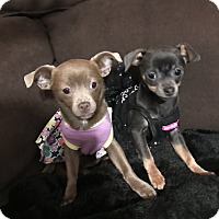 Adopt A Pet :: Eva and Ali - Chicago, IL