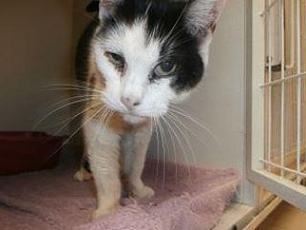 Adopt A Pet :: Cinderella  - Princeton, WV