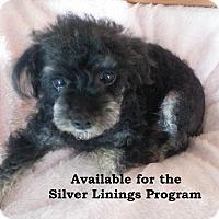 Adopt A Pet :: Martin - San Diego, CA