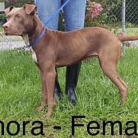Adopt A Pet :: Gamora - Waycross, GA