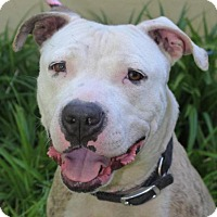 Adopt A Pet :: MULAN-Low Fees-Altered - Red Bluff, CA