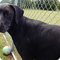 Adopt A Pet :: Samantha - Terrell, TX