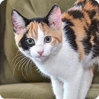 Adopt A Pet :: Merriweather - Davis, CA