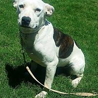 Adopt A Pet :: Betty Lou - Phoenix, AZ