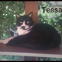 Adopt A Pet :: Tessa - Calimesa, CA