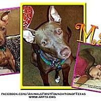 Adopt A Pet :: Maya - Irving, TX