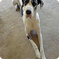 Adopt A Pet :: Brody - Palmyra, WI