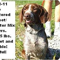 Adopt A Pet :: # 411-11 - RESCUED! - Zanesville, OH
