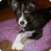 Adopt A Pet :: Molly - Woodstock, ON
