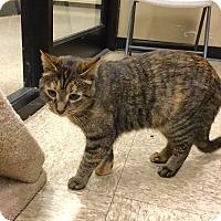 Adopt A Pet :: Goldie -Adoption Pending! - Colmar, PA